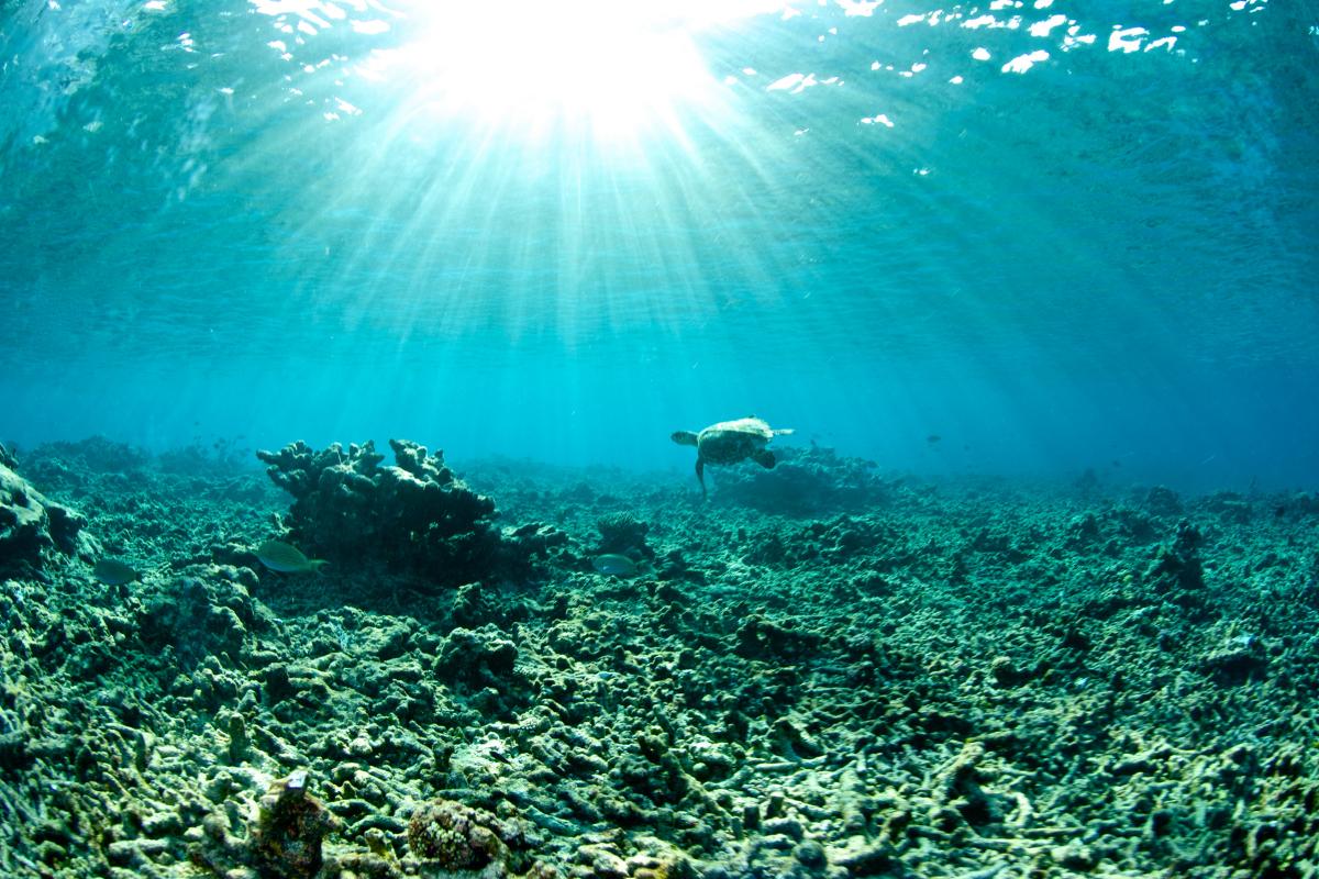 Vegan zonnebrand en het belang van koraal